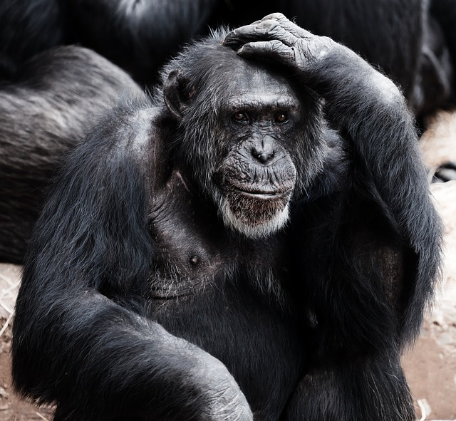 Ep 1 Charla Nash – Chimp Attack – Where is the Line?